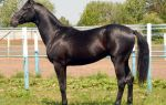 Дикие лошади: обзор пород и их характеристик