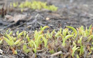 Вегетационный период растений: что это такое, сроки и способы ускорения вегетации