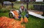 Подкормка моркови в открытом грунте: лучшие удобрения, правила и этапы