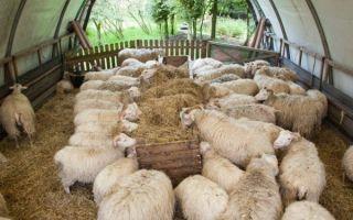Кормушка для овец и ягнят: виды, как сделать своими руками, покупка