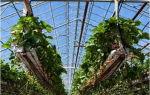 Удобрение прудов: виды удобрений, правила их внесения и хранения