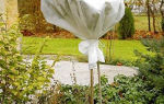 Слива анна шпет: описание сорта, фото, отзывы, правила посадки, ухода и выращивания