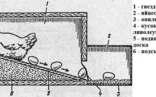 Курятник своими руками: предварительная подготовка и пошаговая инструкция изготовления
