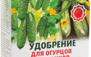 Подкормка кабачков: этапы, способы, виды удобрений