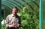 Подвязка огурцов в теплице: способы и подробные инструкции