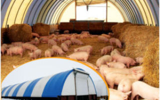 Глубокая подстилка для свиней: суть технологии, особенности применения, отзывы