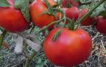 Томат летний сад: описание и характеристики с фото, посадка, выращивание и уход, отзывы