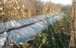 Уход за виноградом осенью: полив, обработка, обрезка и подготовка к зиме