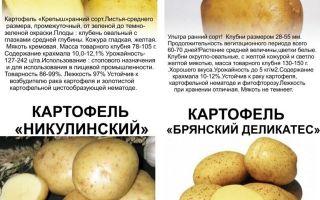 Картофель метеор: описание и характеристики сорта, фото, посадка, выращивание и уход