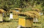 Тимол для пчел: инструкция по применению, состав, противопоказания