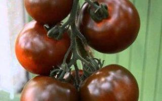 Томат кумато: описание сорта, фото, правила выращивания, плюсы и минусы
