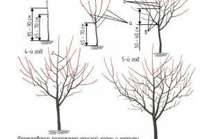 Посадка черешни весной: правила, инструкции, рекомендации