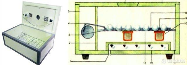 Инкубация утиных яиц: правила, режимы, рекомендации и возможные ошибки