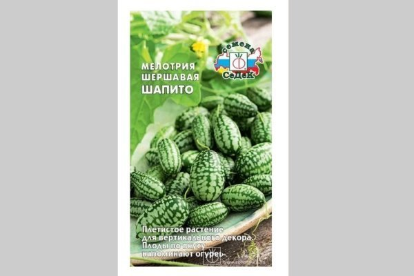 Мелотрия шершавая (мини огурцы): характеристики, посадка, фото, сбор урожая, отзывы