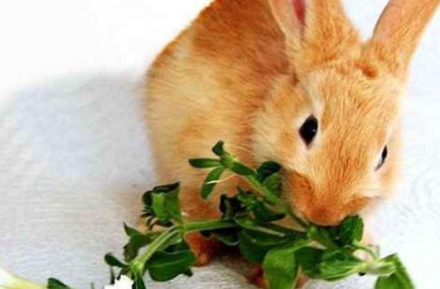 Чем кормить кроликов: виды корм, витамины, подробный рацион и вредные продукты