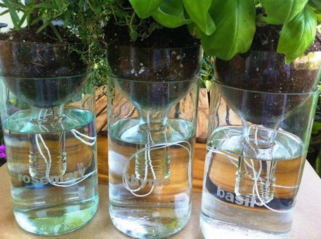 Полив кабачков: общие правила, способы, периодичность, требования к воде