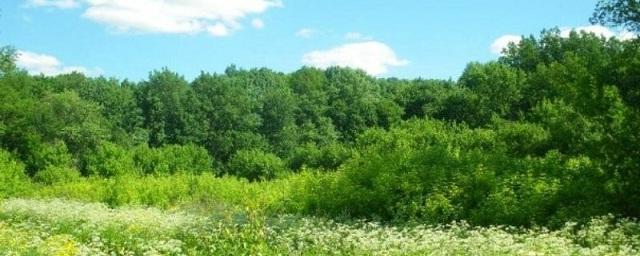 Грибы Волгоградской области (съедобные и ядовитые): описание с фото, где и когда растут