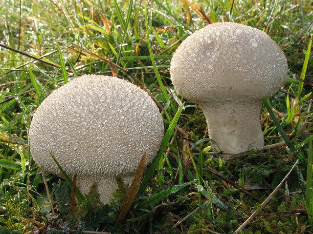 Какие съедобные грибы можно собирать в мае?