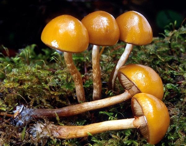 Ядовитые (несъедобные) грибы: фото, названия и их описание
