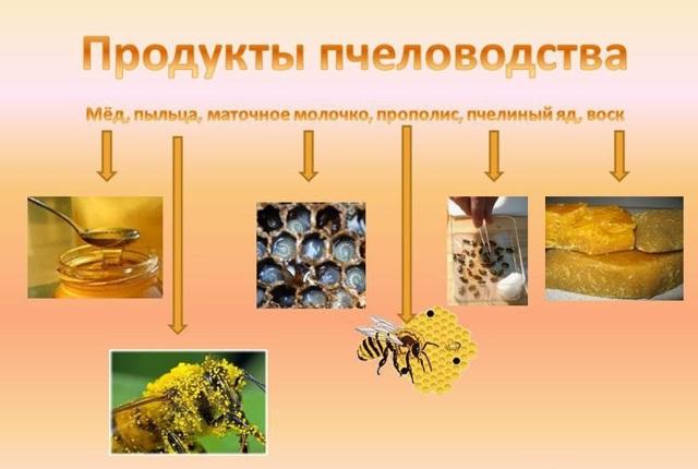 Пчелиная семья: её состав, жизнь, функции маток, трутней, рабочих пчел