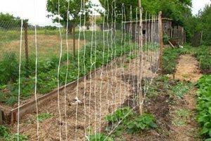 Подвязка огурцов в открытом грунте: сроки, способы, методы, ошибки