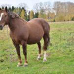 Буланый конь: описание масти с фото, и интересные легенды