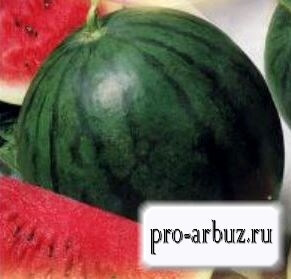 Арбуз Скорик: характеристики, описание посадки и выращивания, фото, отзывы