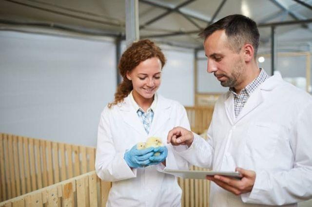 Инкубация куриных яиц: отбор материала, закладка, этапы и особенности ухода