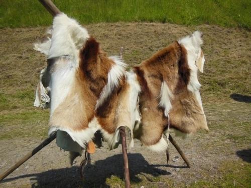 Выделка овечьих шкур: пошаговые инструкции, инвентарь, важные правила