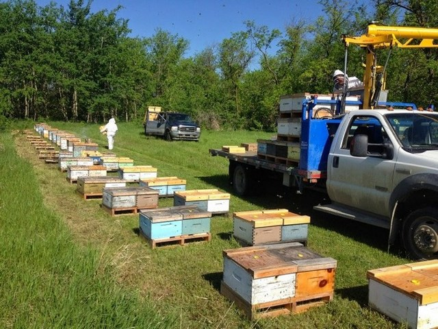 Сколько меда дает один улей за сезон и за год? Какие факторы влияют на производительность пчёл?