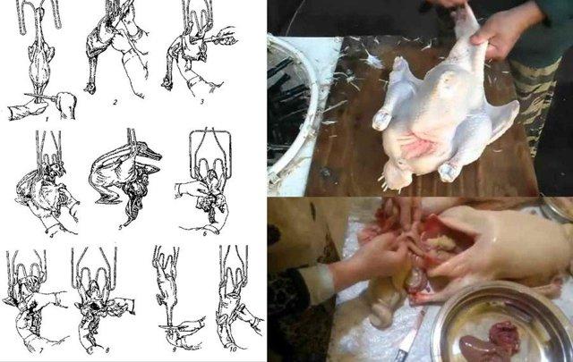 Как зарубить курицу: правила и способы забоя, обработки и хранения мяса