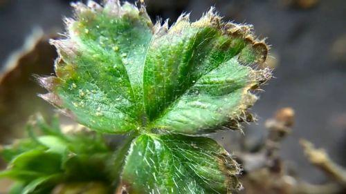 Уход за облепихой осенью: сбор урожая, обрезка, полив, рыхление, подкормка, обработка
