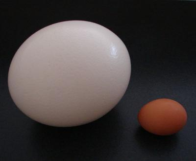Страусиное яйцо: вес, ценность, как разбить и приготовить яйцо