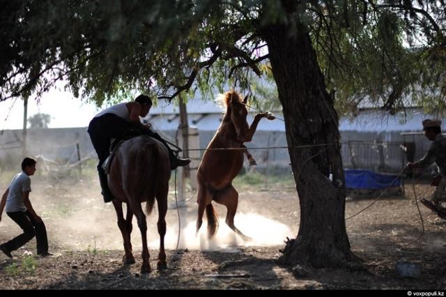 Забой лошадей: подготовка, пошаговая инструкция, разделка и хранение