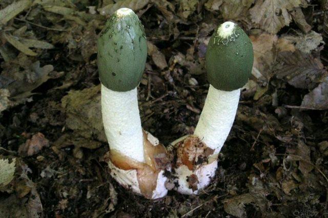 Съедобные лесные грибы: названия, описание и фото