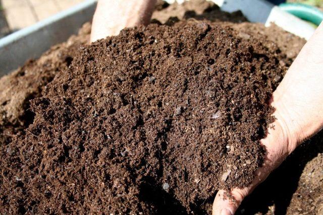 Морковь Королева осени: характеристики сорта, посадка, выращивание, сбор урожая