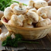 Оборудование для выращивания грибов в домашних условиях и промышленных масштабах