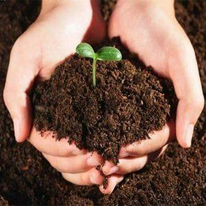 Подкормка тыквы: сроки, способы, виды удобрений