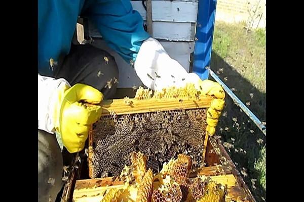Подготовка пчел к зимовке: формирование гнезда, обработка ульев, заготовка корма