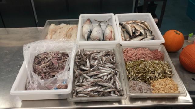 Корм для рыб своими руками: рецепты и рекомендации по кормлению
