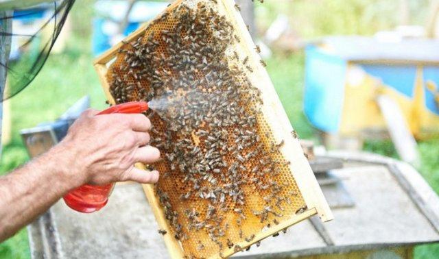 Пчеловодство в Украине: особенности, советы начинающим