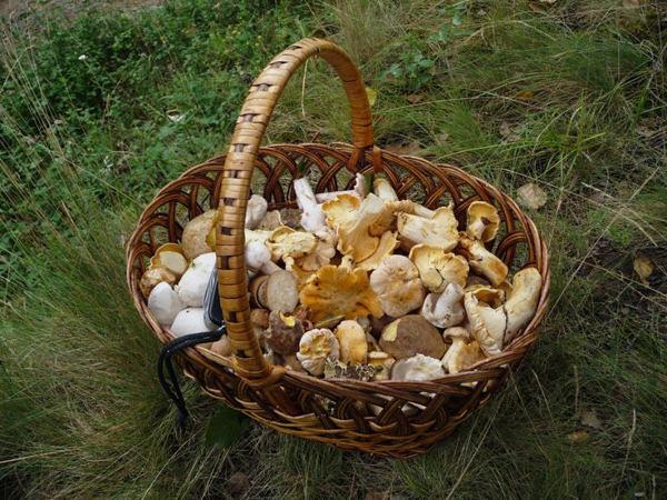 Съедобные грибы Украины: описание, фото, грибные места и сезоны