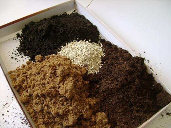 Посадка и уход за баклажанами в открытом грунте: пошаговые инструкции