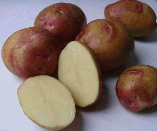Картофель Пикассо: описание и характеристики сорта, выращивание, отзывы