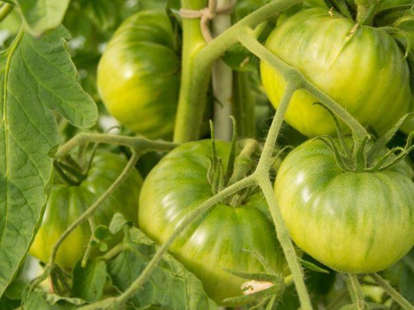 Томат Король королей: описание, плюсы и минусы, секреты выращивания, отзывы