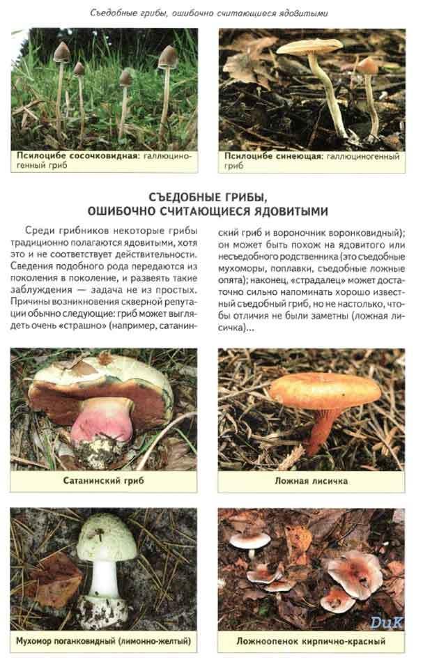 странице грибы с картинками фото грибов с названиями описание информация поменять