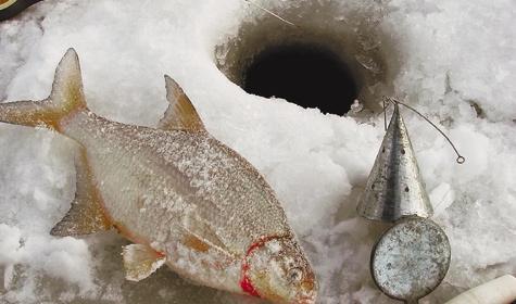 Чем кормить рыбу в домашнем пруду?
