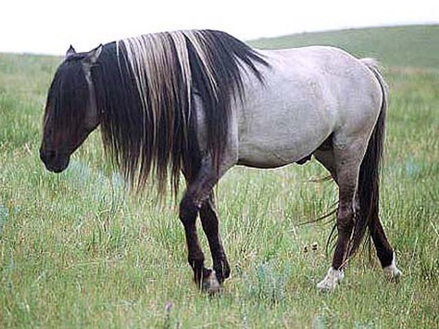 Мышастый конь: описание с фото и характеристики, разновидности масти и породы лошадей
