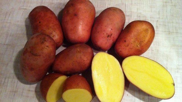 Картофель Родриго: описание сорта, характеристики, выращивание и уход, отзывы