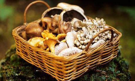 Грибы Приморского края (съедобные и ядовитые): названия, фото, описание. Где растут и когда собирать?